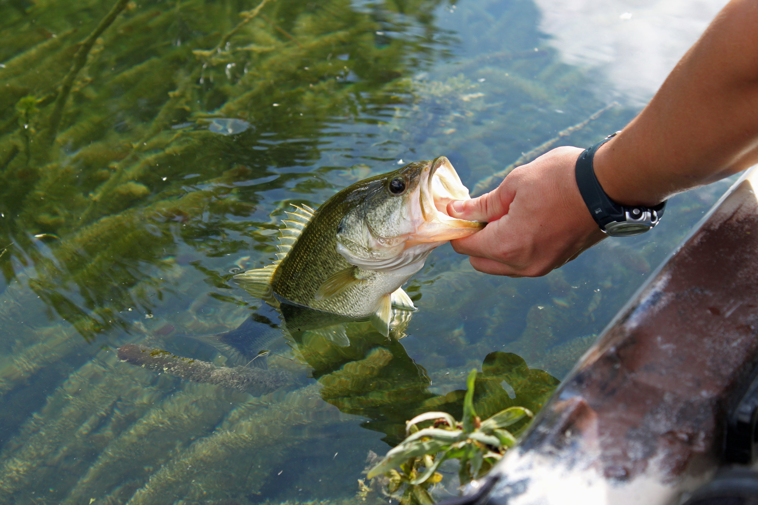 Devils River Largemouth Bass.jpg
