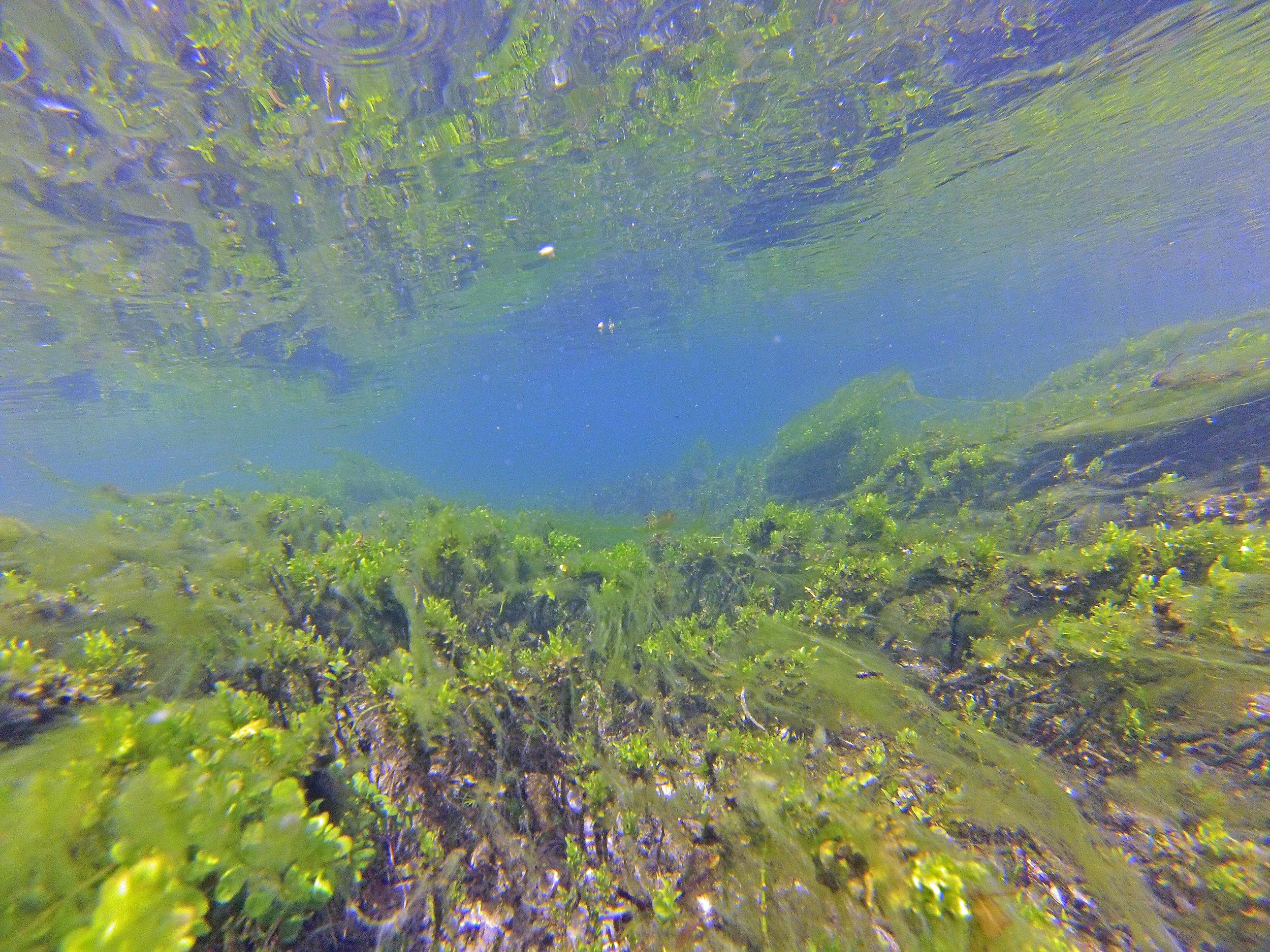 Devils River Underwater.jpg