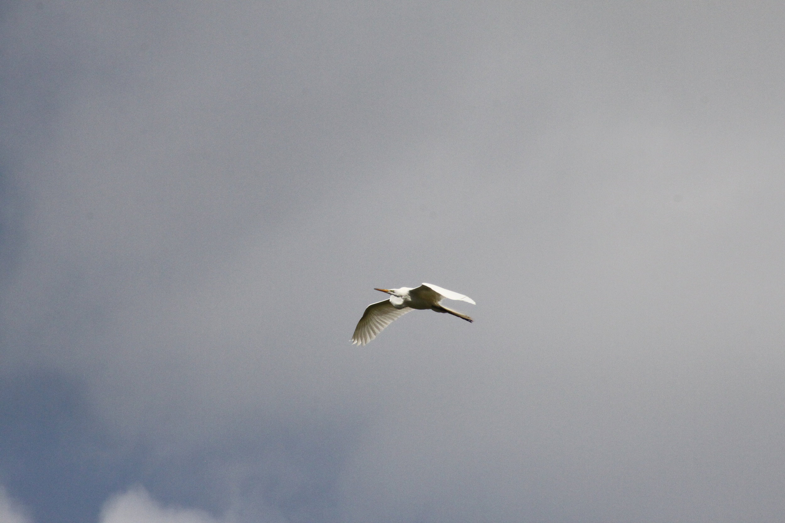 Bird on the Devils River