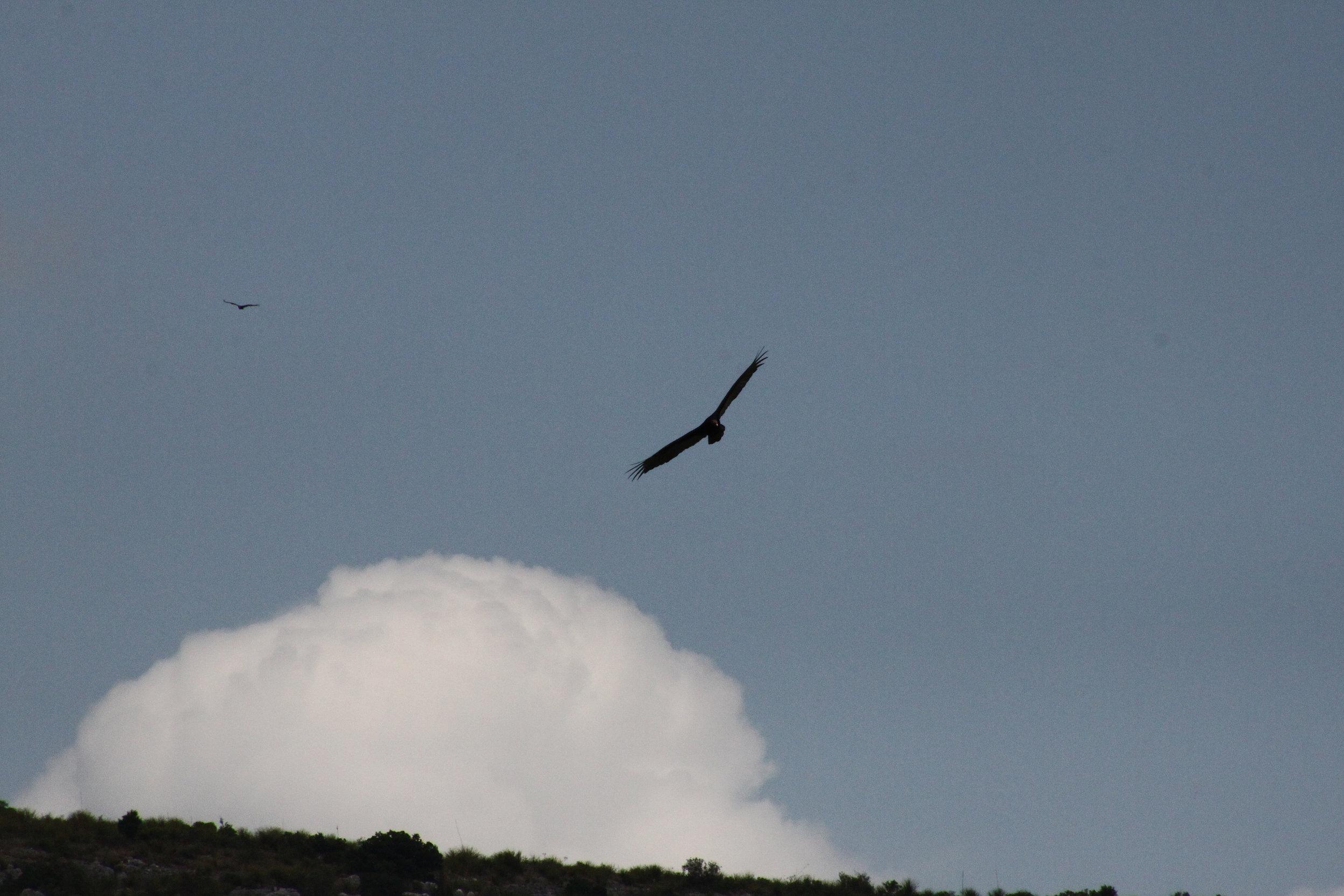 Birds on the Devils River