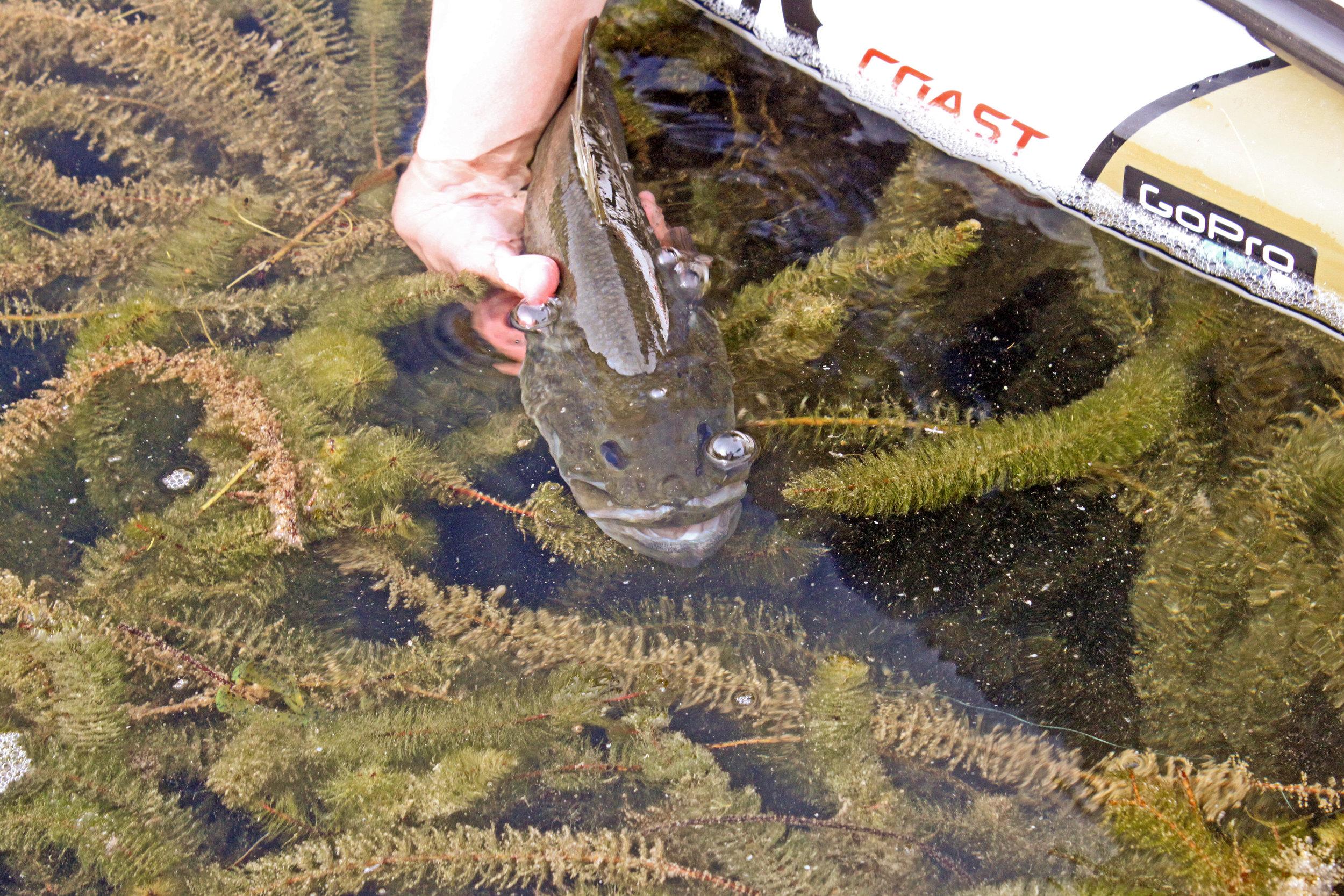 Devils River Largemouth Bass