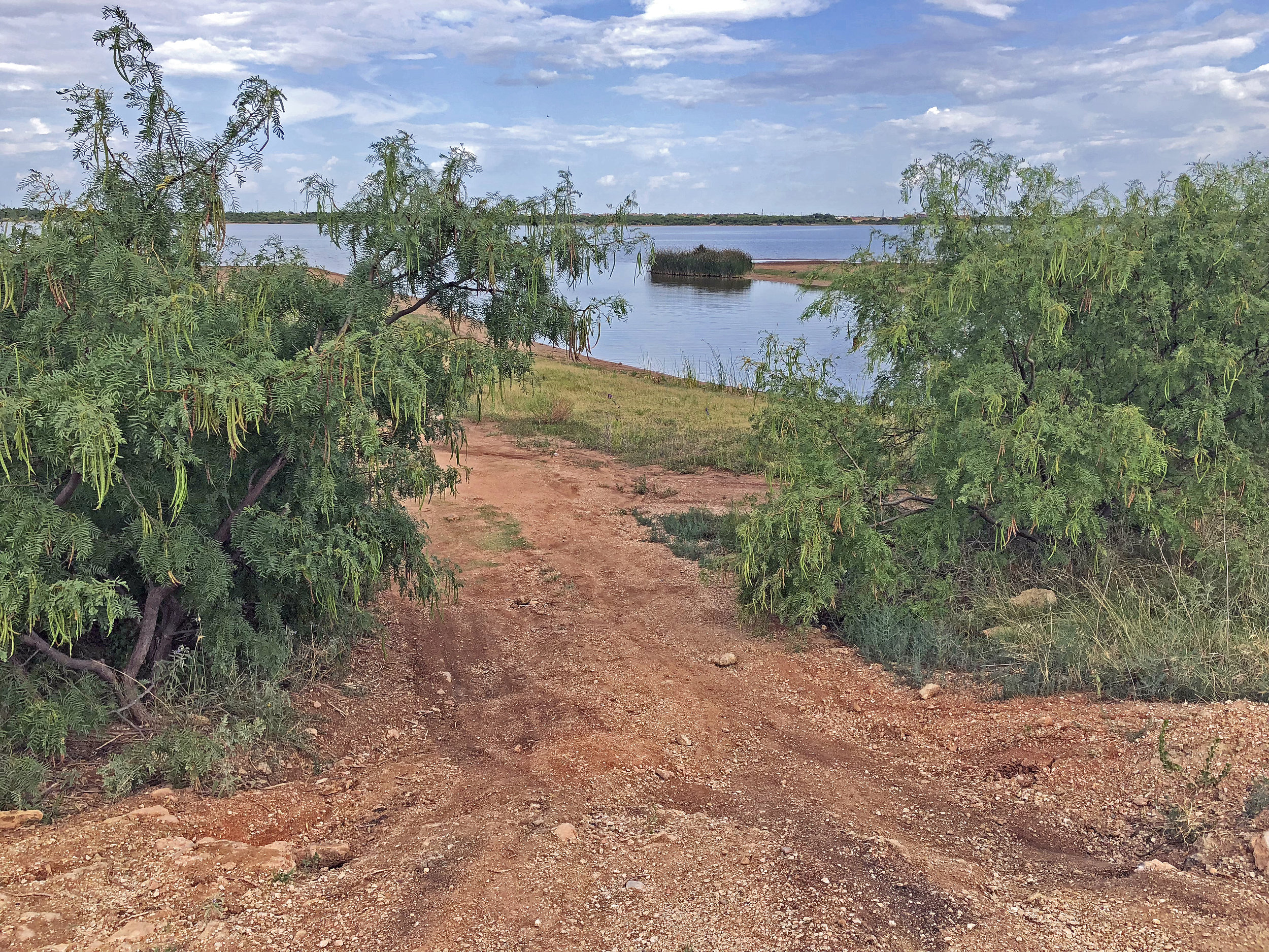 Kabar Kukri Clearing Tree Limbs