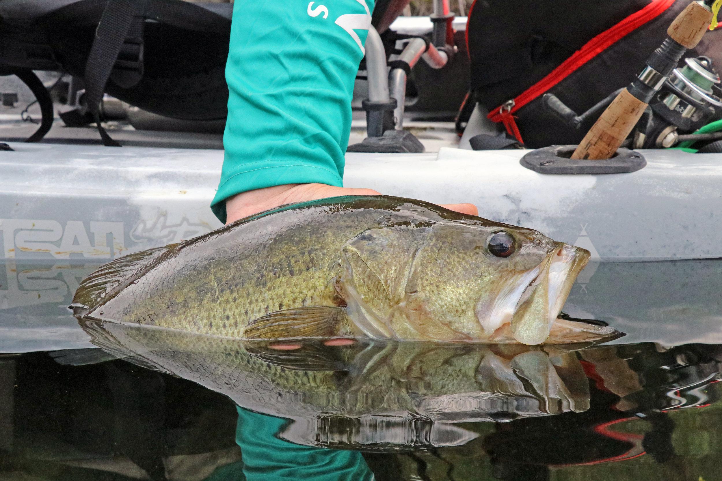 Jackson Kayak Liska Largemouth Bass Fishing