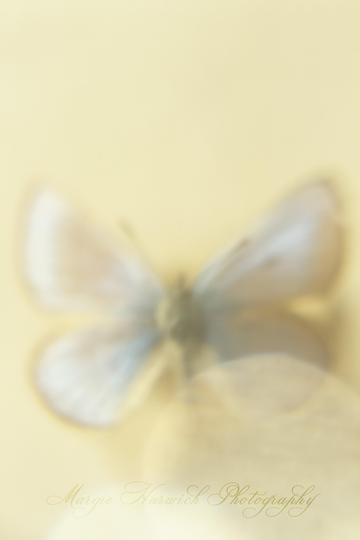 _MG_1902.jpg