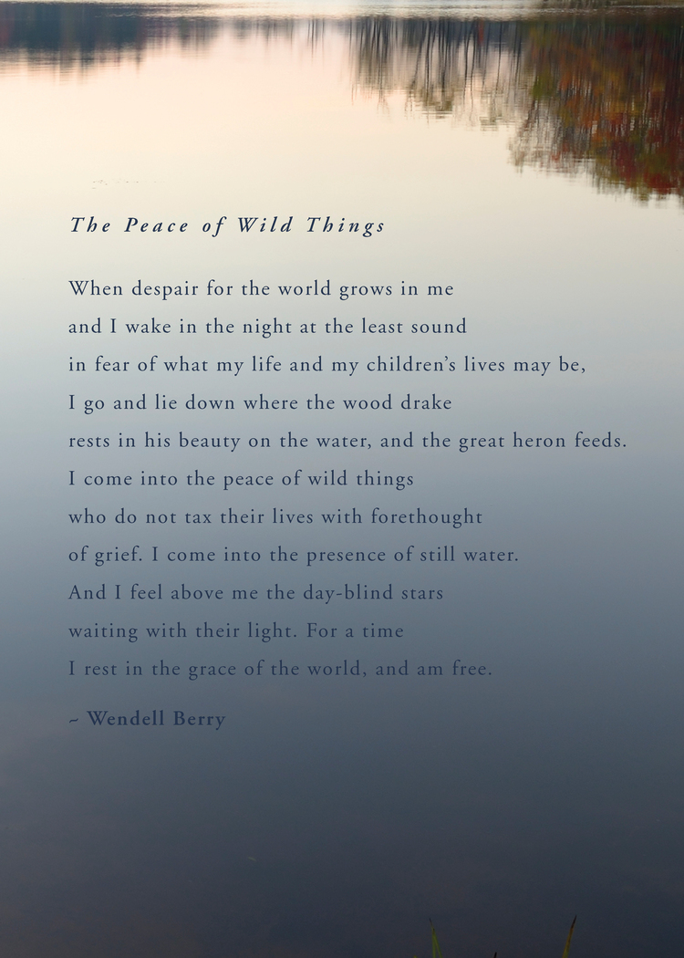 Michelle Larson  - This was a poem shared by a dear friend, Dora James. I thought it was perfect for this week's Word of the Week.