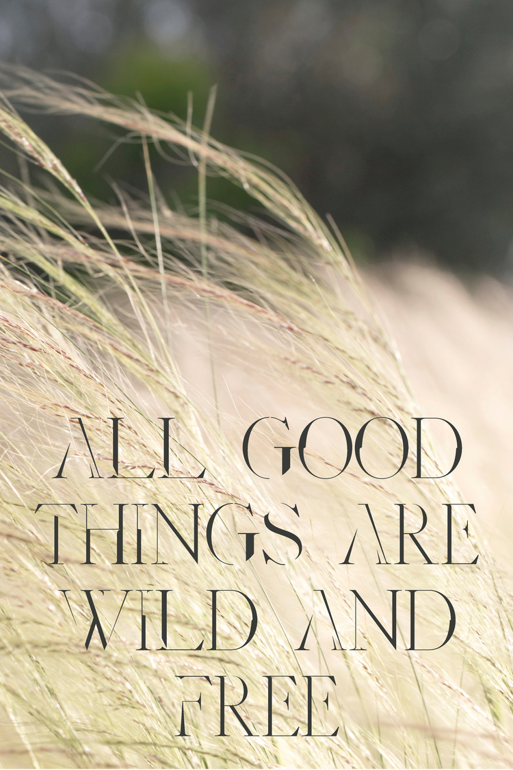 """JulieCimpko  - """"All Good Things are Wild and Free""""....well said."""