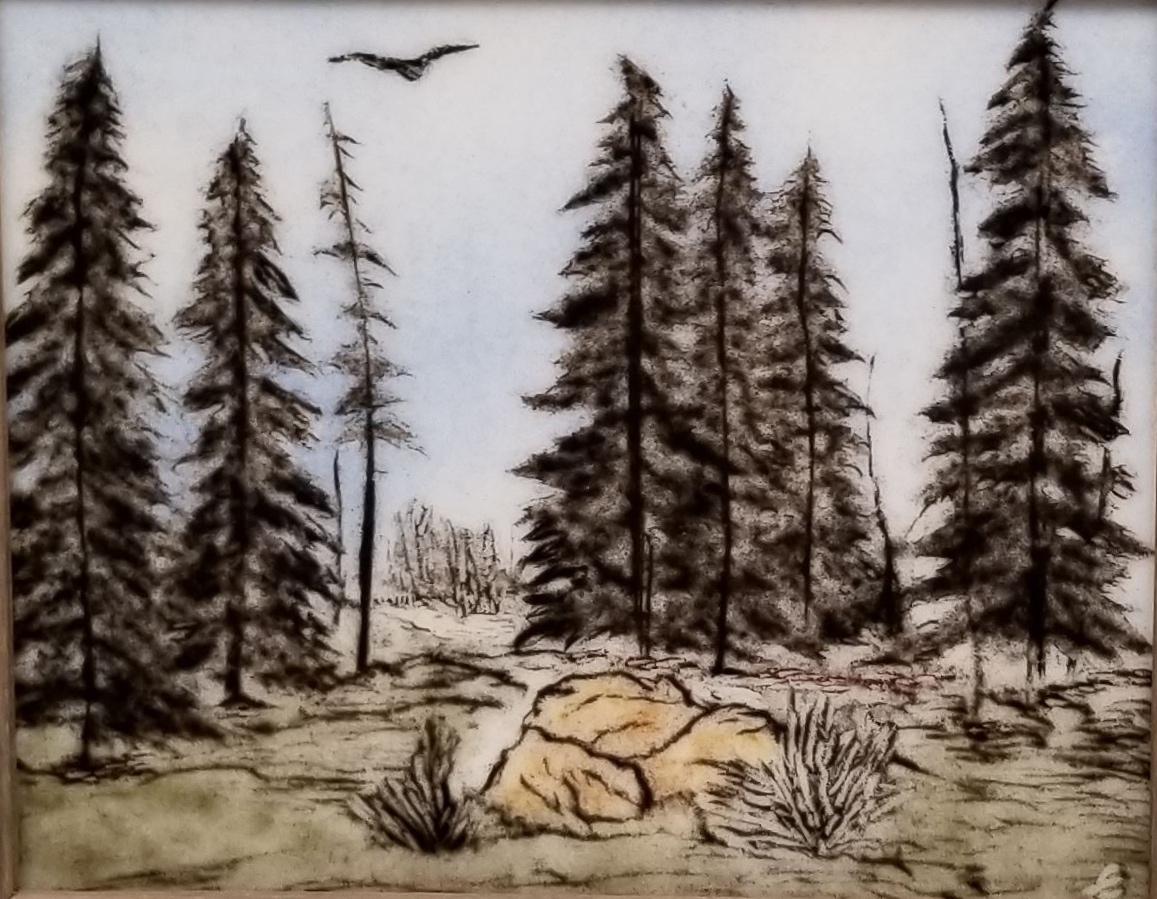 Pine Forest by Elaina Adams.jpg