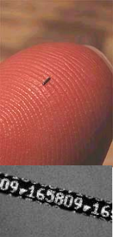White seabass Encoded Tag
