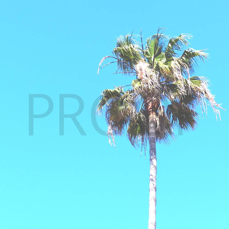 tiny-palm-5-proof.jpg