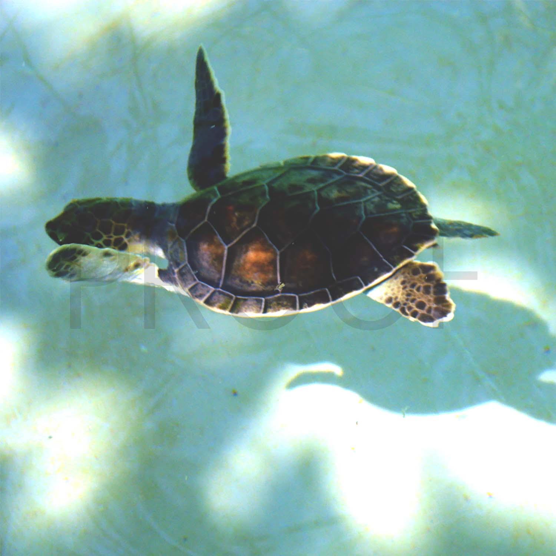 tiny-turtle-5-proof.jpg