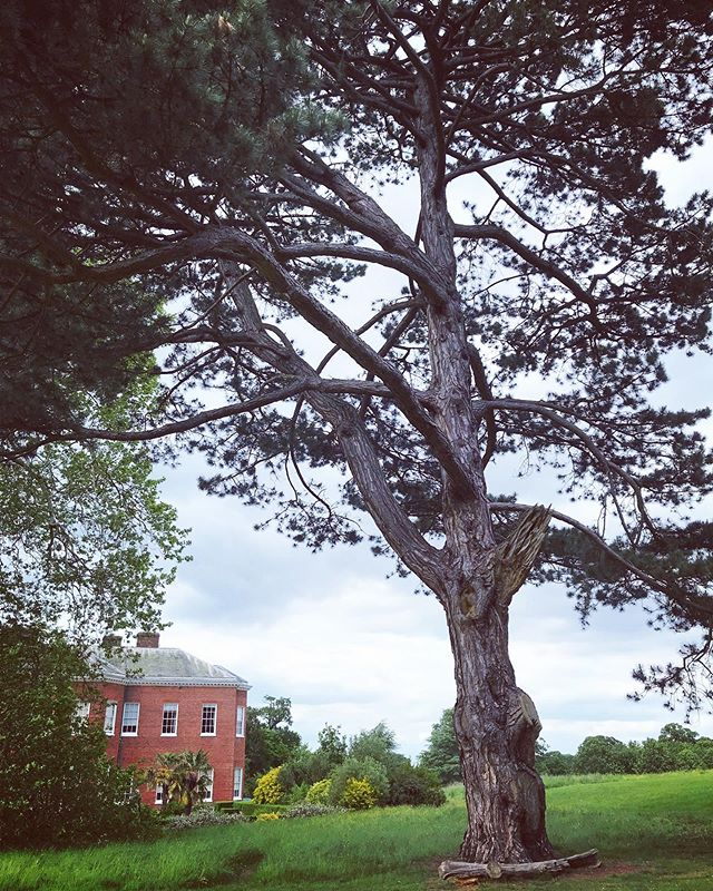 Loveliest day @nationaltrust Hatchlands Park with friends 🖤 This huge tree made me think of my children and how I hope they grow into strong beautiful individuals who blossom and flourish in life. (Bit deep I know!) Also made me think about the different areas of our lives that we all have a part to play in and that I hope whatever I put my hand to can grow, flourish and reach its full potential... be it in my marriage, business, friendships etc. Being out in the gorgeous countryside today and having good conversation with my friend made me really appreciate all the wonderful things in life. It's easy to get complacent, bogged down in the everyday and take things for granted so today I'm choosing to be grateful for so much 🖤 Random Thursday night thoughts! What are you grateful for? . . Loving half term! One more day to go and I'm considering a spontaneous beach trip tomorrow! Do I do it?! . . . #handmadebusiness #surrey #surreymama #surreybusiness #spprtsisters #nationaltrust #surreycountryside #flourishbabyflourish #grateful #choosegratefulness #smallbizsurrey #discoverunder3k #surreybloggercollective #surreylife