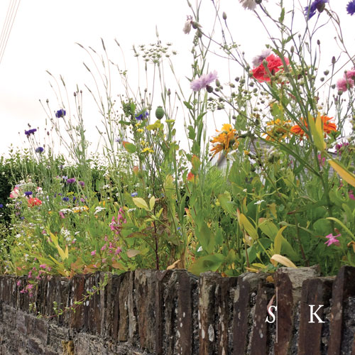 Meadow on a Stone Wall