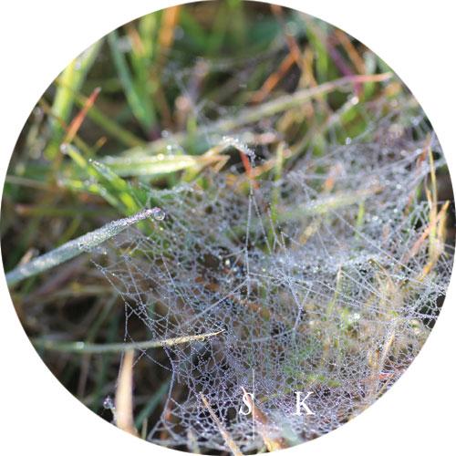 Cobweb and Dew in Cornwall