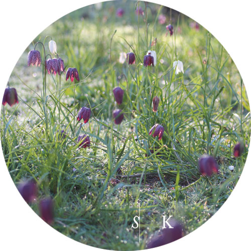 Meadow Cornwall