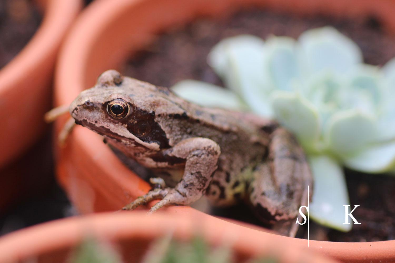Nursery Frog Slugs