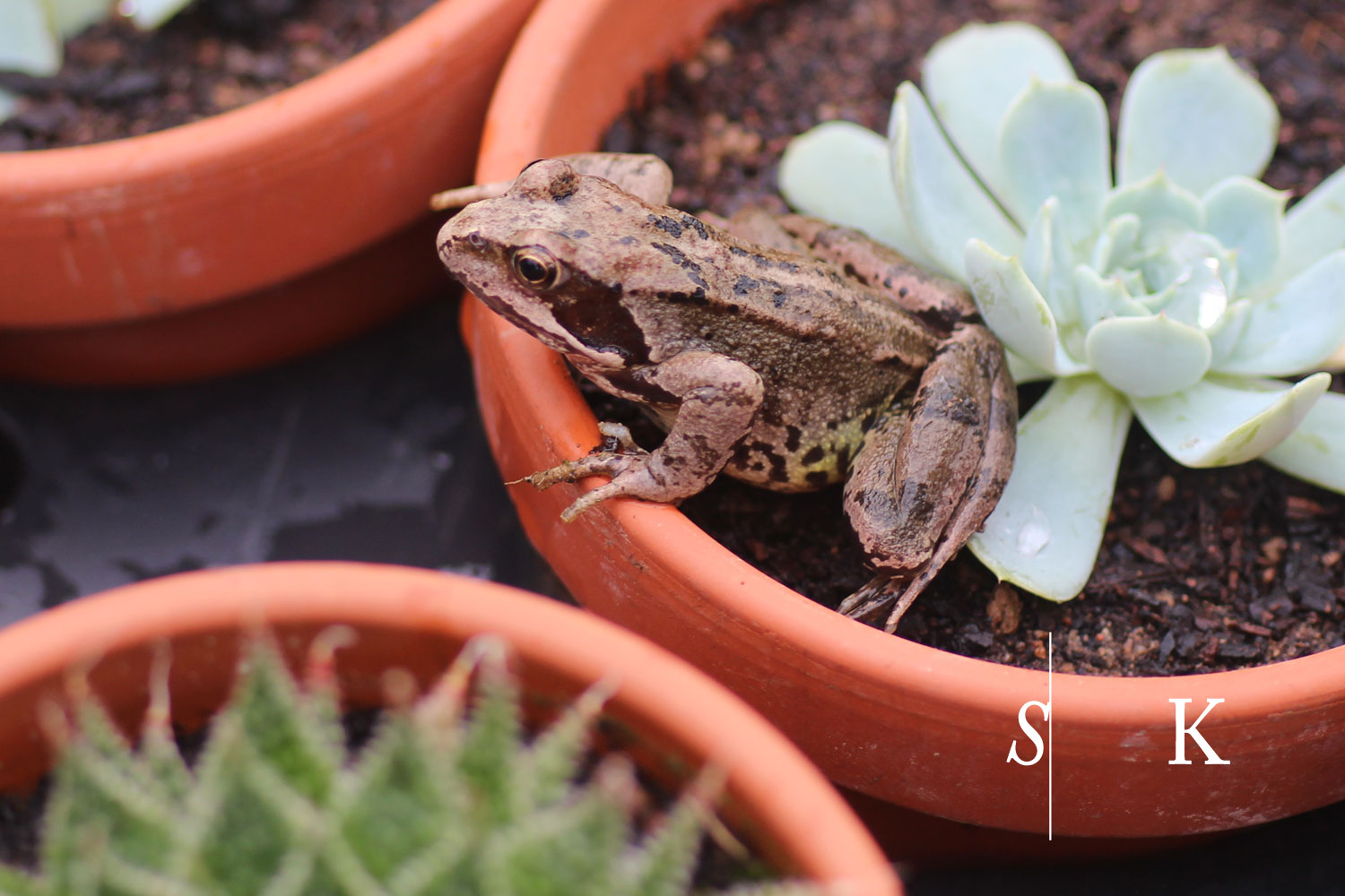 Another frog at the nursery
