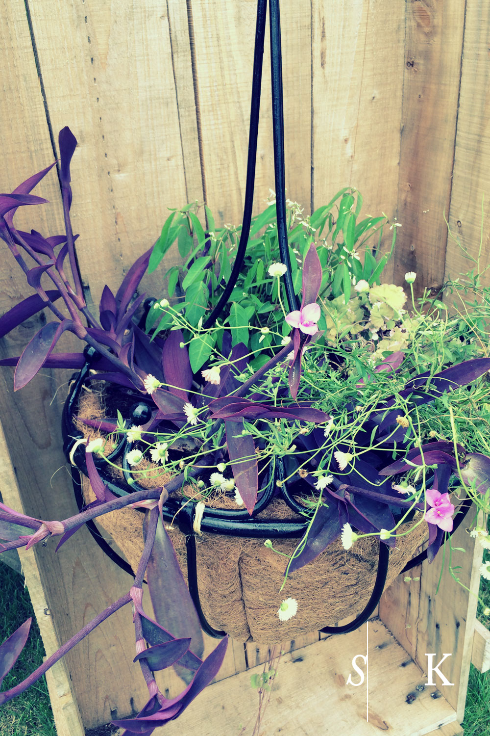bespoke hanging baskets in Cornwall