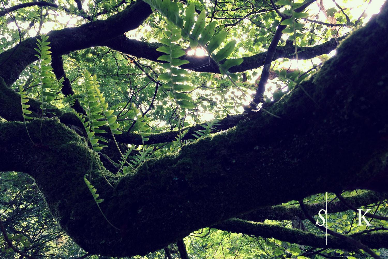Cornwall Autumn woods