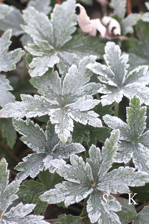 Frosty Morning in Cornwall in November