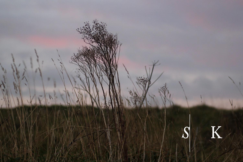 December Meadow Coast Cornwall