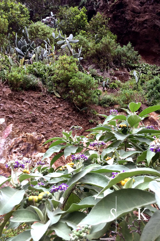 Subtropical Cornwall Madeira