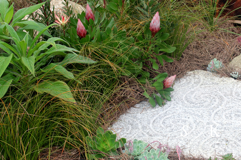 Boconnoc Flower Show 2017 - Selma's Show Garden