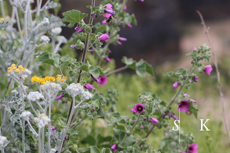 Cliff top plants Cornwall Garden Design