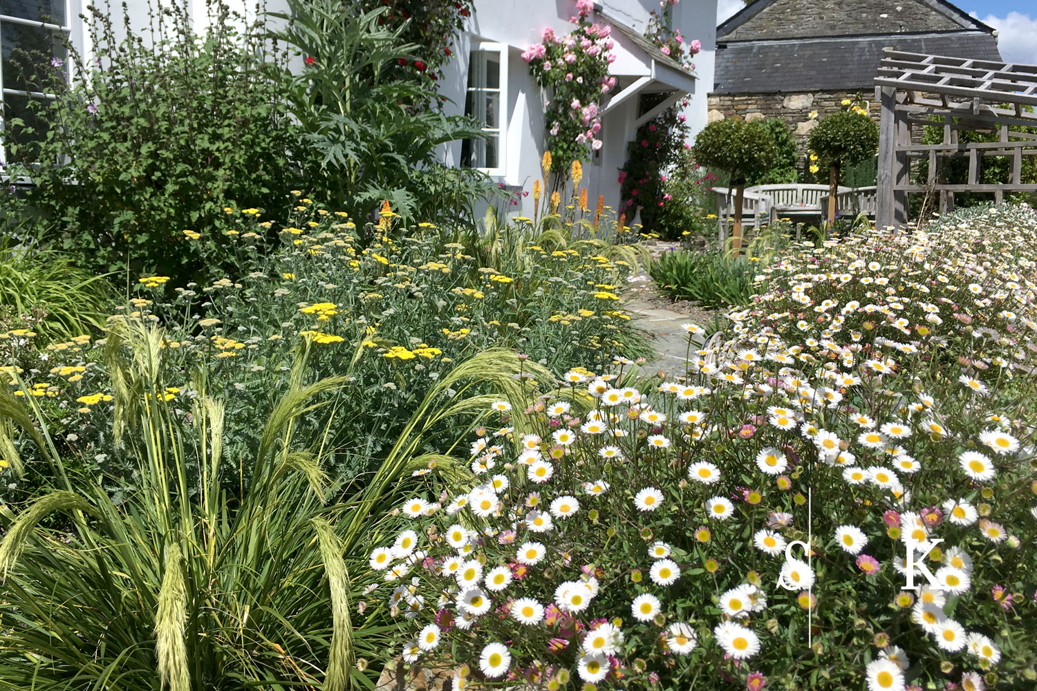 one year after planting in Cornwall garden near Lostwithiel