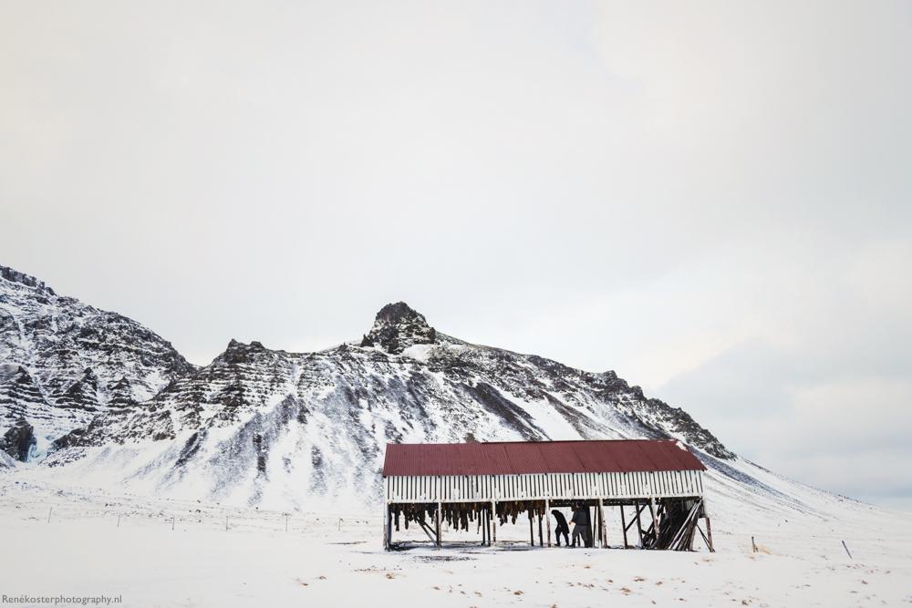 RKP-ICELAND--2800A.JPG