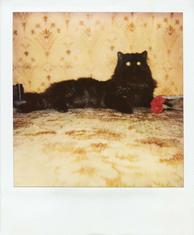 Polaroid_1993_Polina_Shubkina-010 copy.jpg