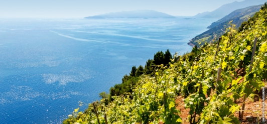 Dingac Vineyard on the Dalmatian Coast of Croatia. Sometimes you can just look at a vineyard site and know that great wine is made there.