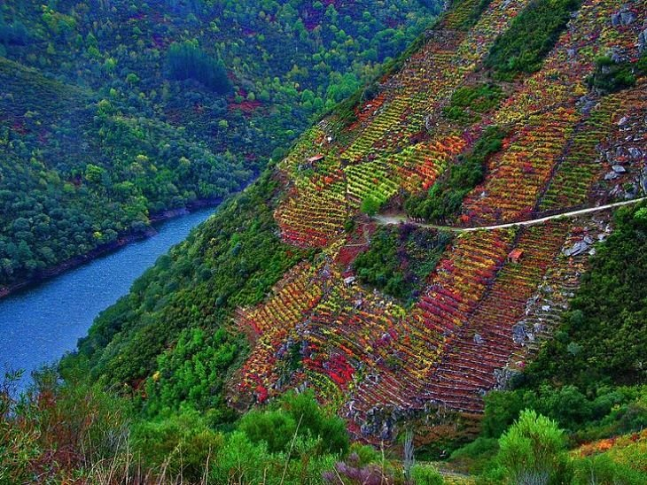 We'll never tire of posting this pic of autumn vineyards in Ribeira Sacra.