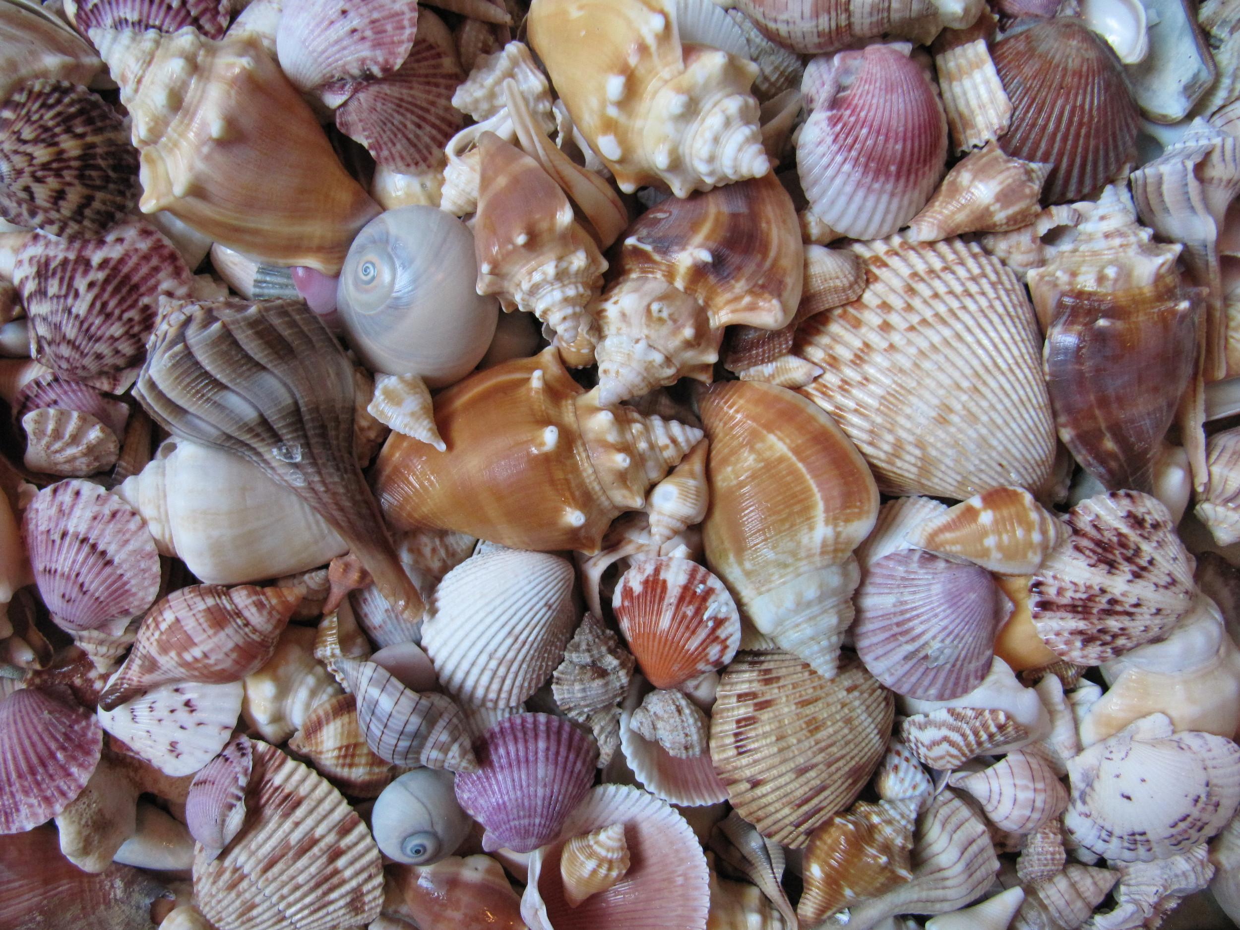 Picking up seashells... Photo credit:www.beachtreasuresandtreasurebeaches.com