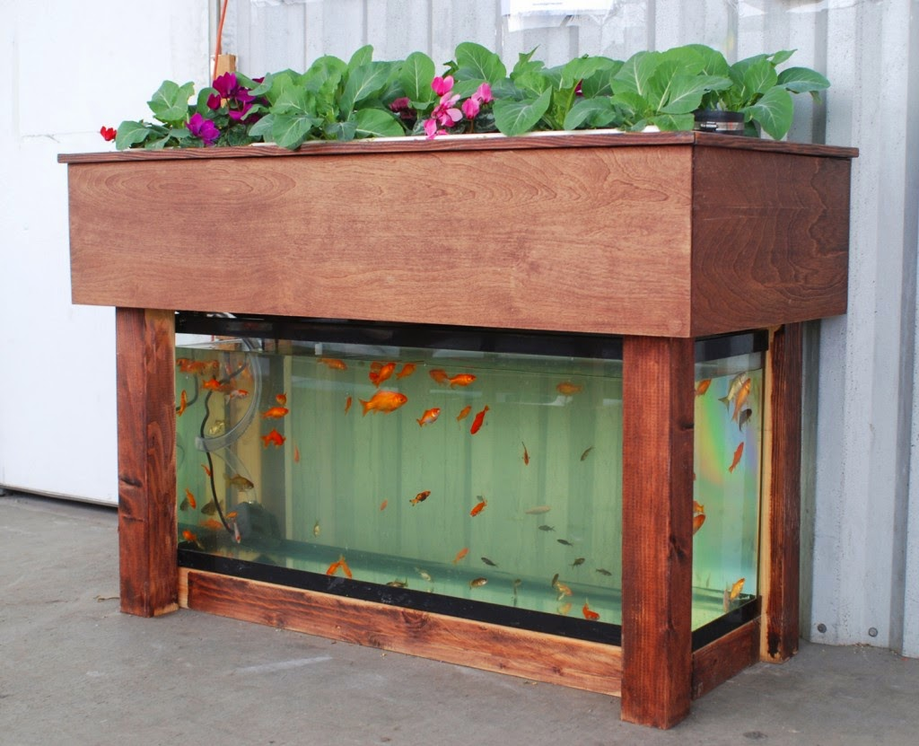 A simple aquaponics setup could satisfy science requirements while providing fresh produce (and fish!) for student consumption. This aquaponics kit is available through  Kijani Grows .