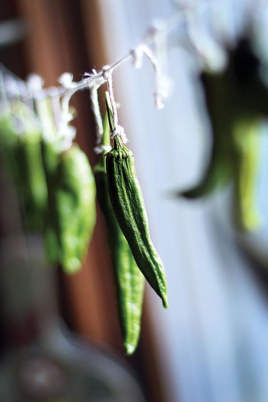 peppers jpg.jpg
