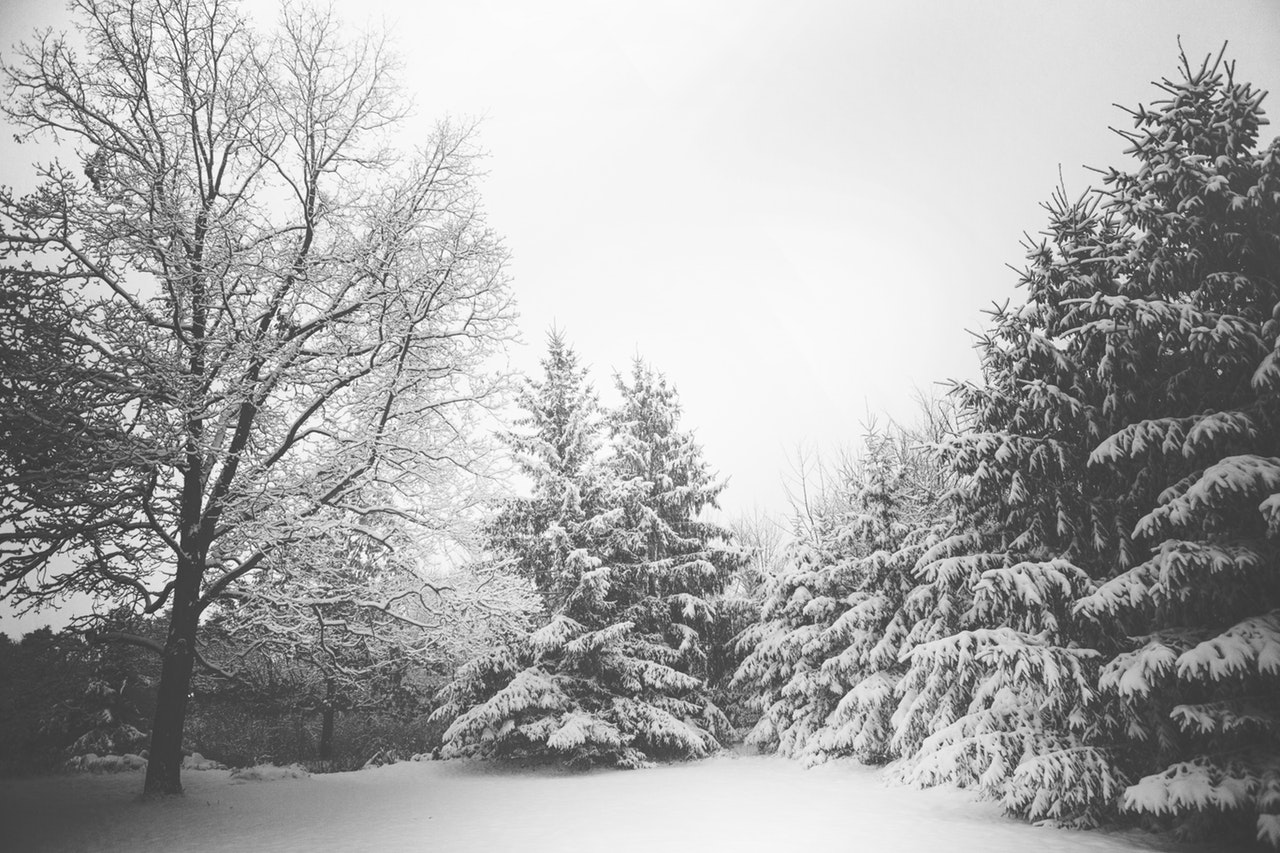 snow-landscape-trees-winter.jpg