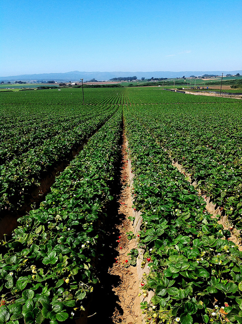 """""""Sundance Berry Farms Aug2012""""    by    National Farm Worker Ministry      is licensed under    CC BY 2.0"""