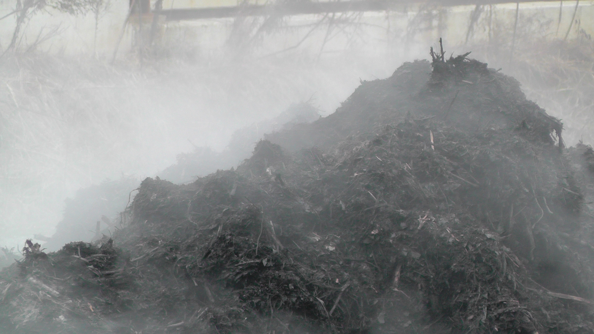 Compost_steaming_-_detail_3.jpg