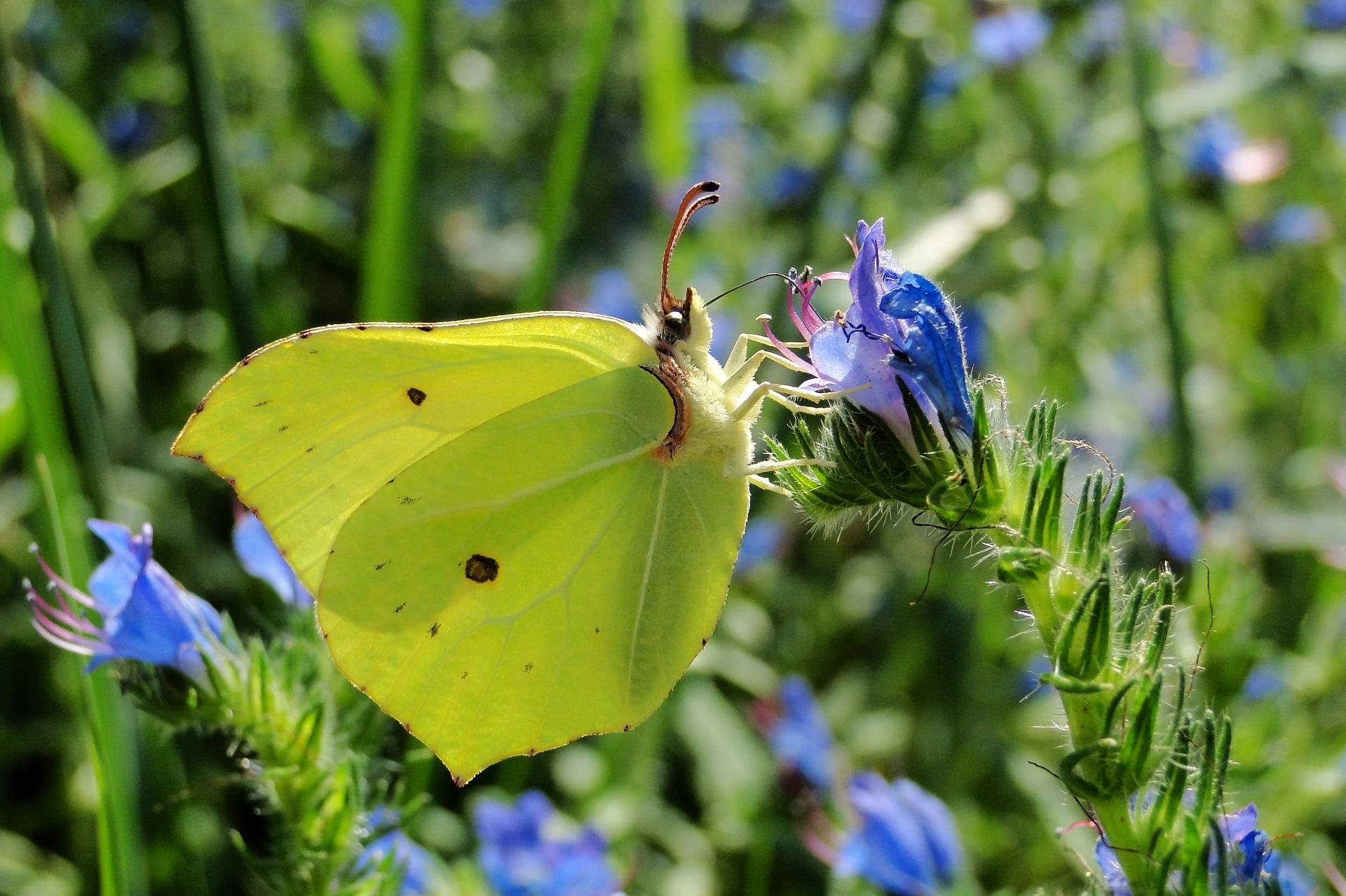 nature-3189460_1920.jpg