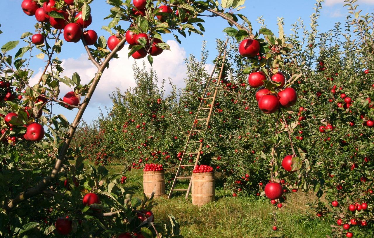 apple-1873078_1280.jpg