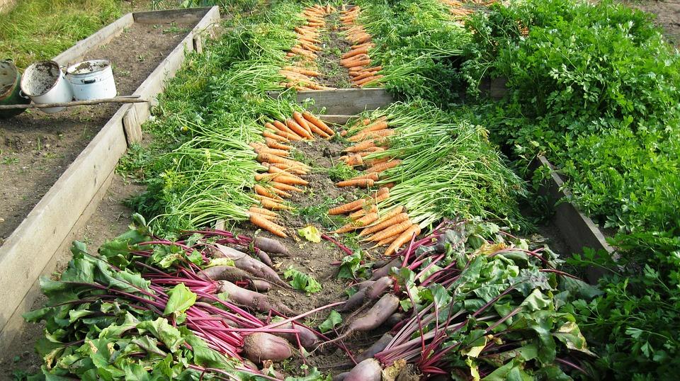 harvest-897733_960_720.jpg