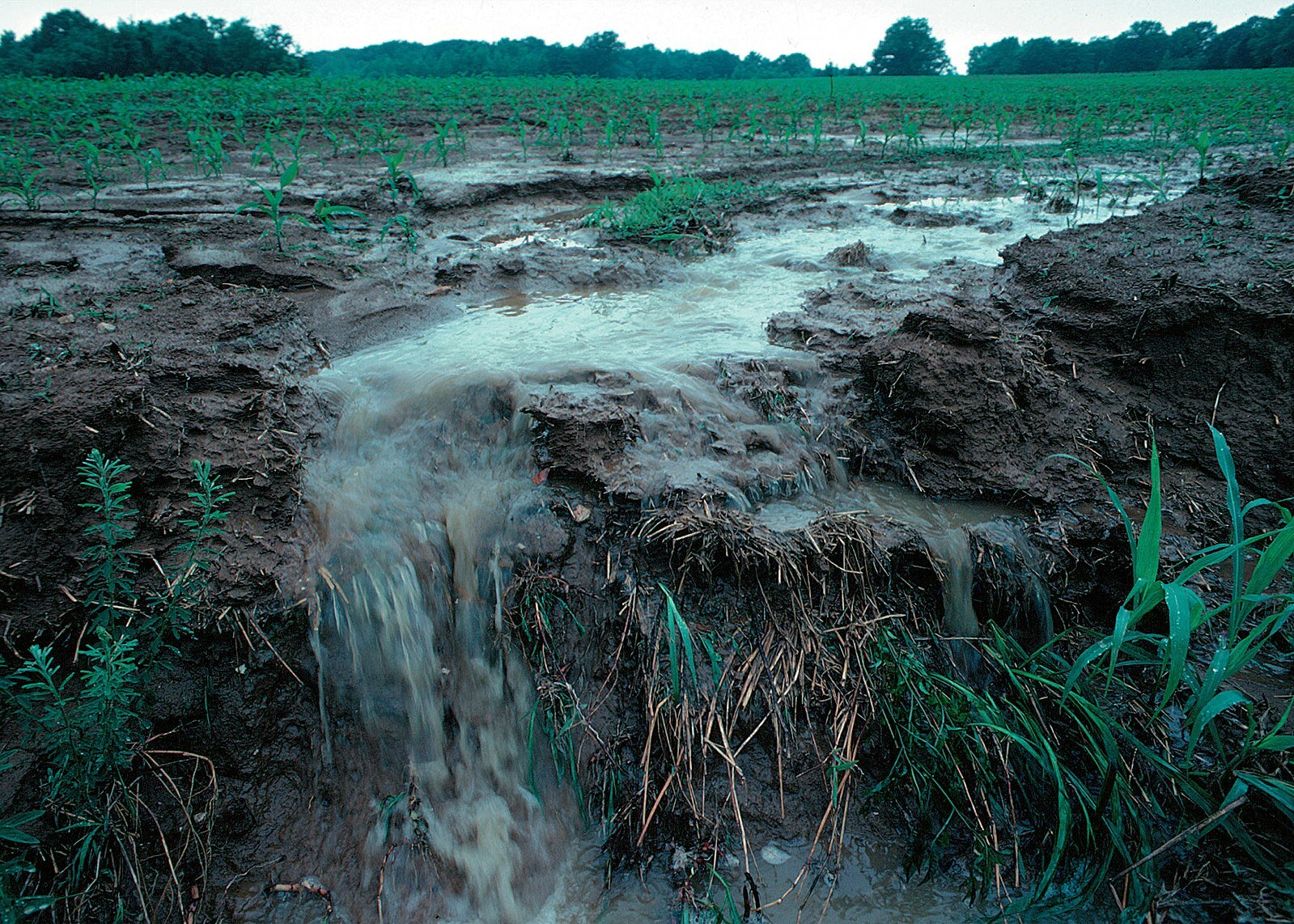 1599px-Runoff_of_soil_&_fertilizer.jpg