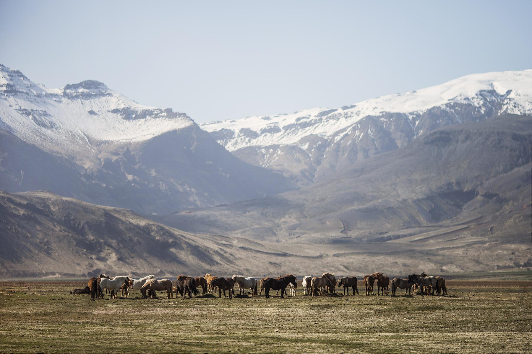 Valley Horses