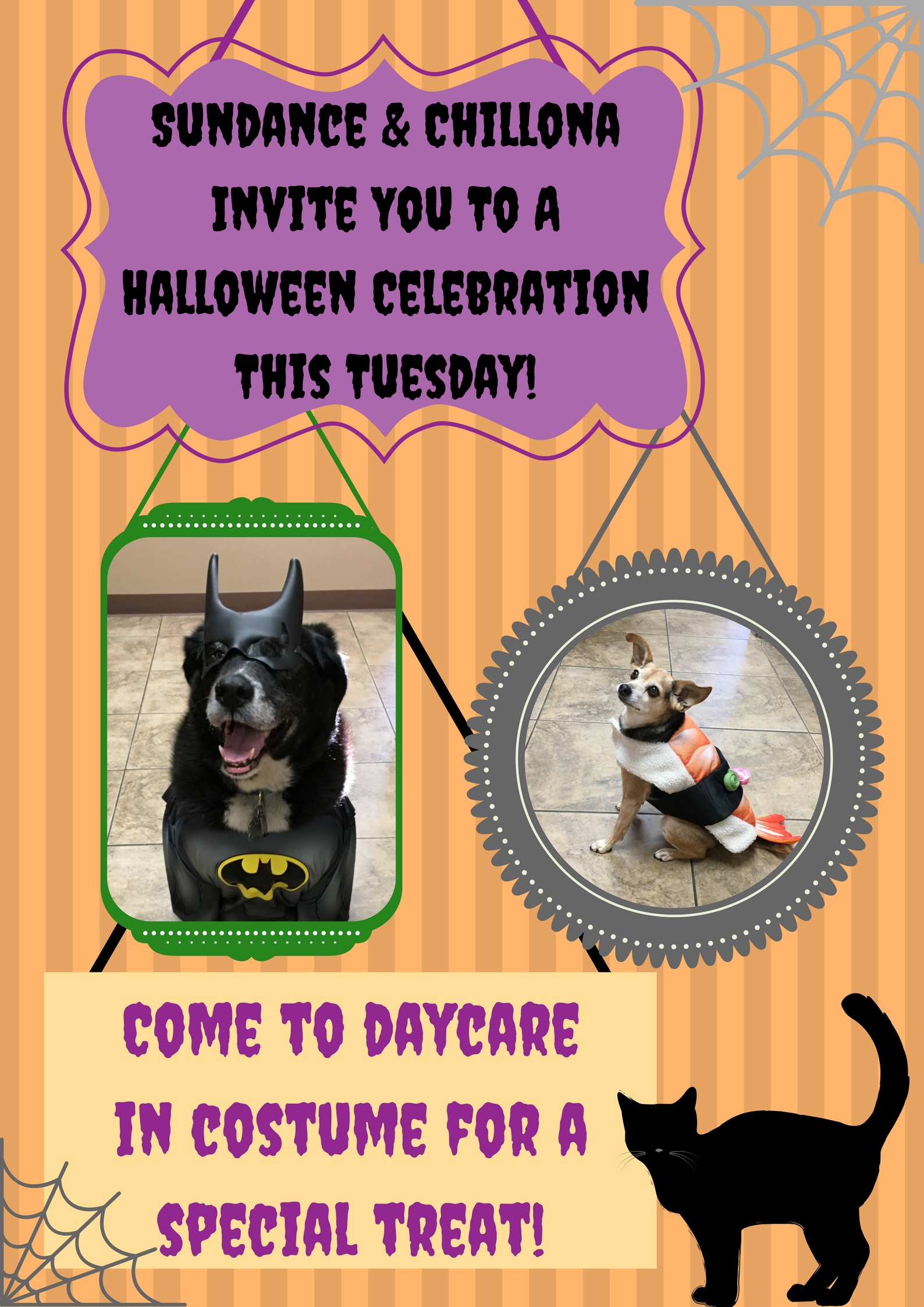 Sundance & Chillona Invite You To A Halloween Celebration This Tuesday!.jpg