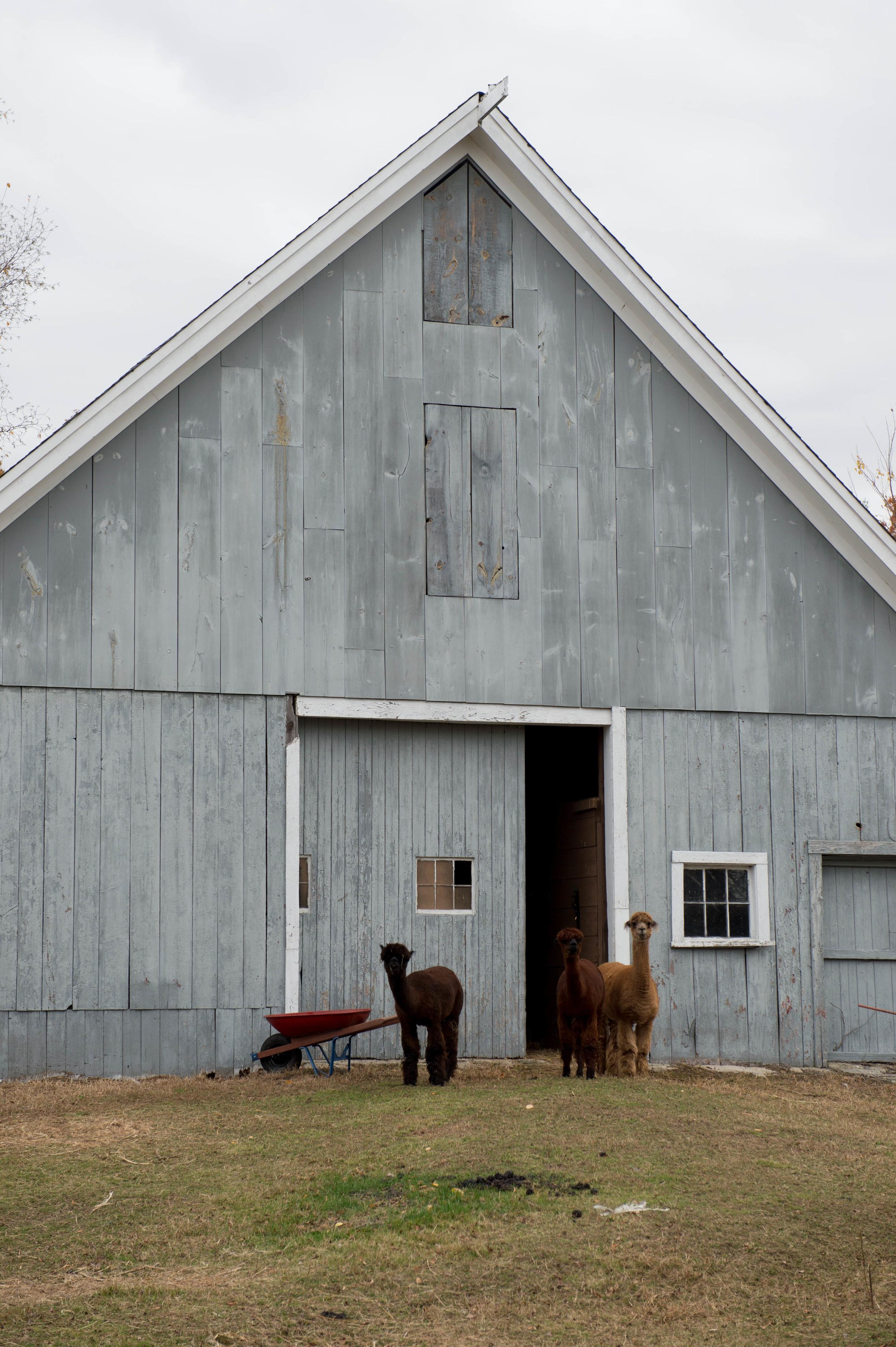 Lilac_Farm_Edible_Boston005.jpg