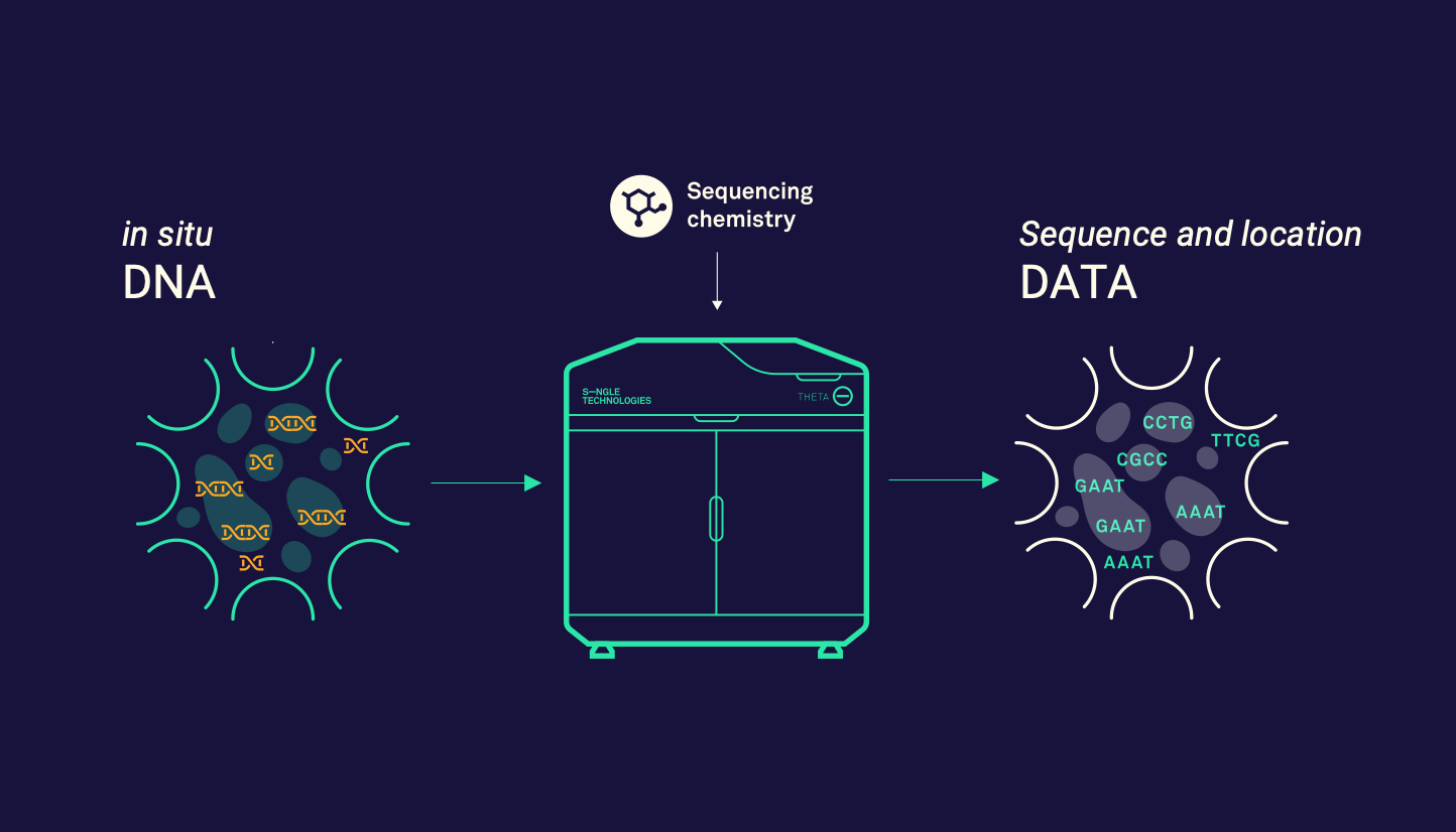 Left: add tissue to our flow cells and plug it into the Theta Sequencer. Right: locations and sequencing data generated.