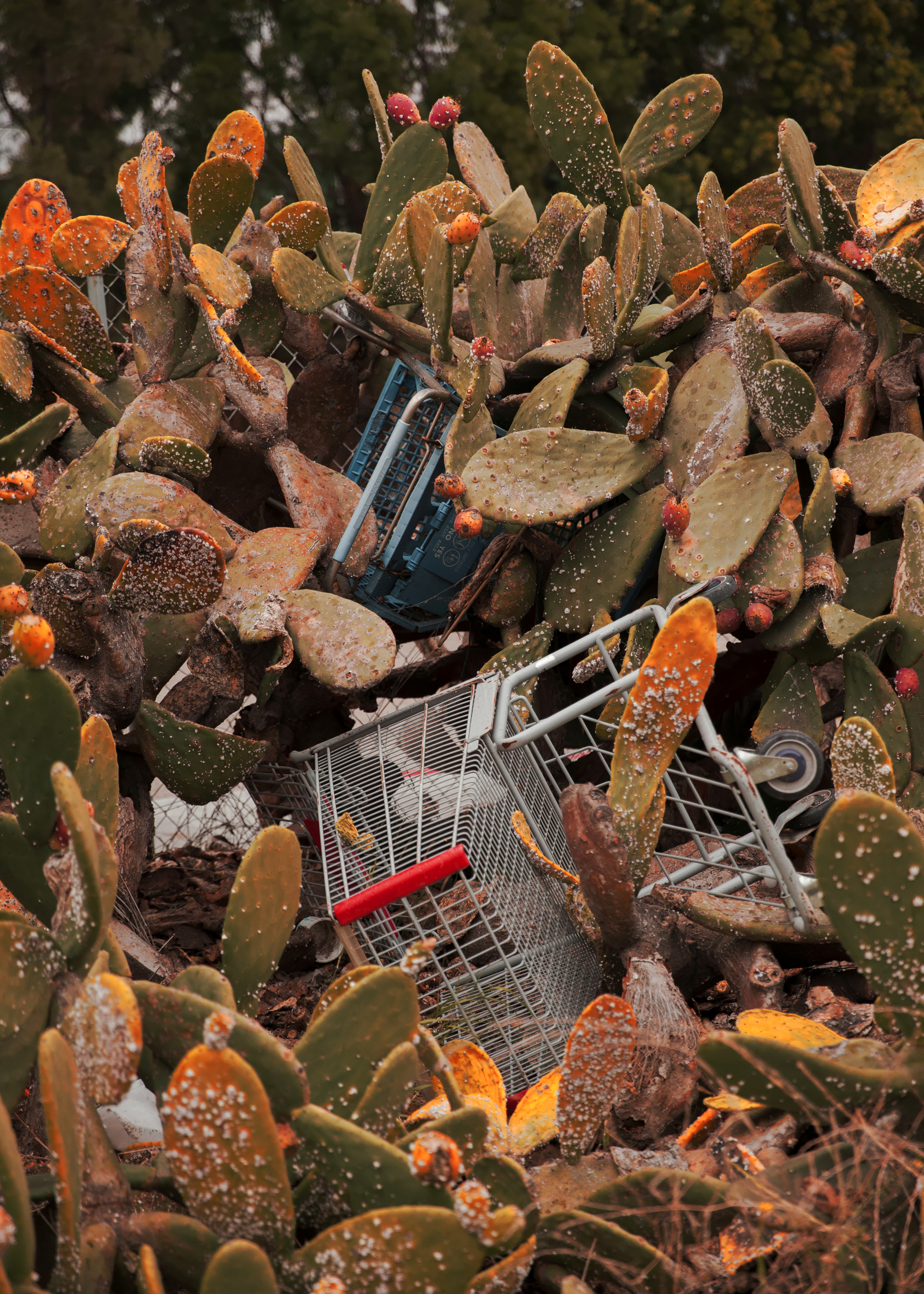 CactusCarts400x_10Inches.jpg
