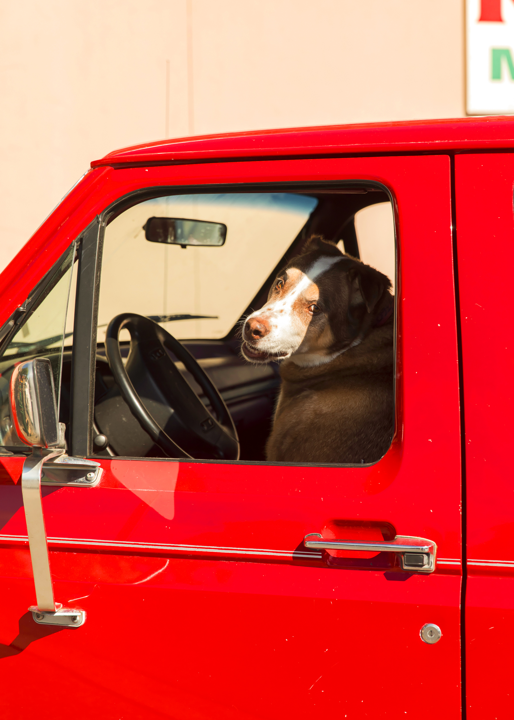 TruckDoggo_10Inches.jpg