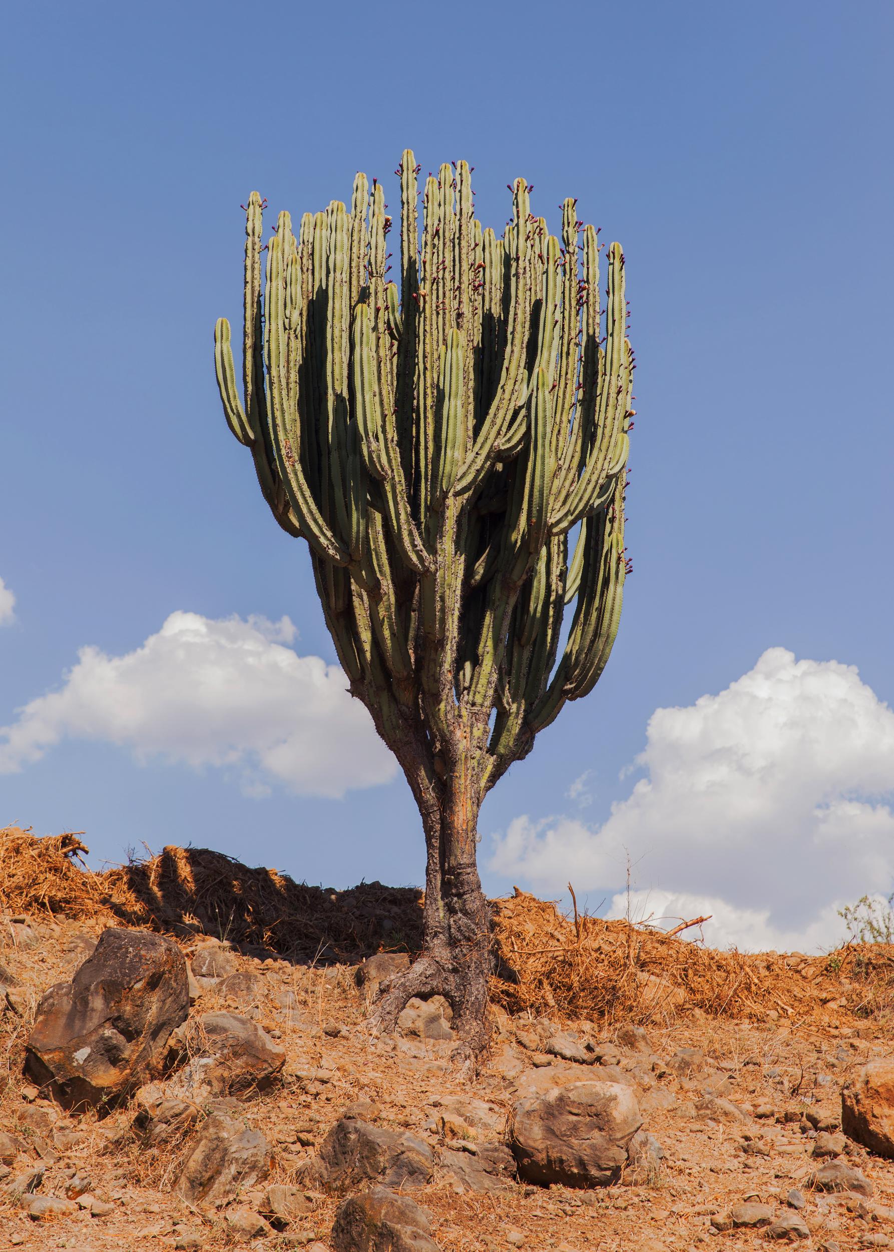 CactusTall400X_10Inches.jpg