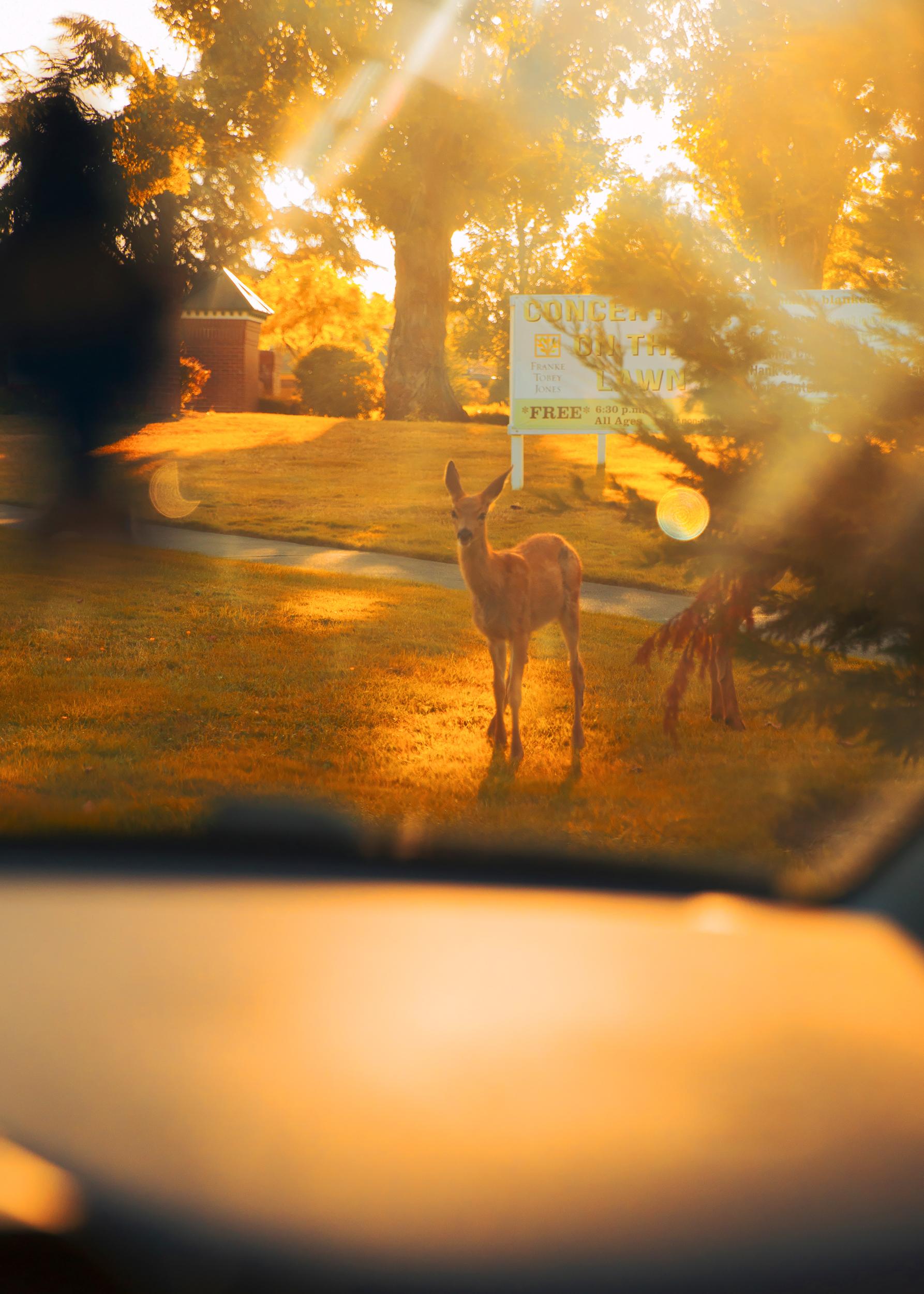 Deer_10Inches.jpg